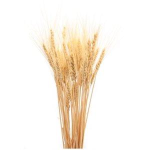 """Gerbe de blé (Naturel) 24"""" 8oz"""